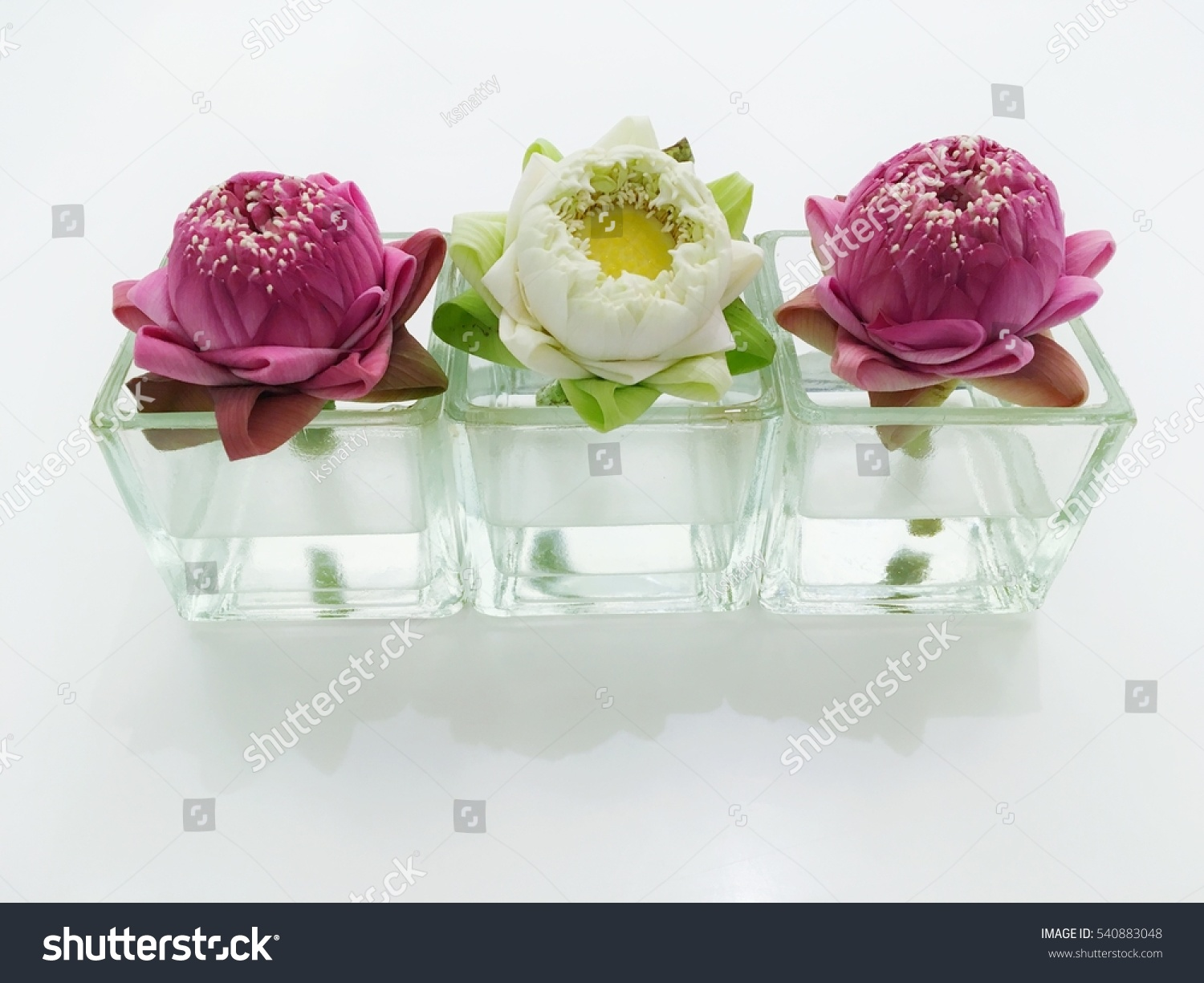 Three Lotus Flower Glass Vase Stock Photo Edit Now 540883048