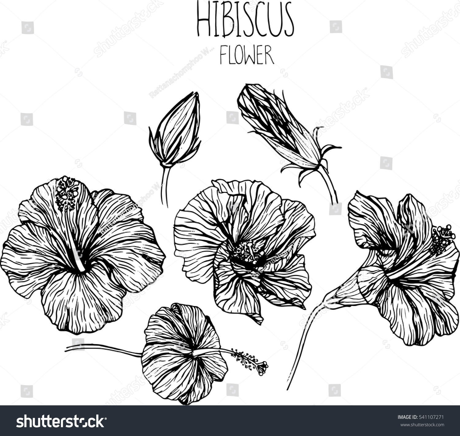 Hibiscus flowers drawing vector illustration clipart stock photo hibiscus flowers drawing vector illustration and clip art izmirmasajfo