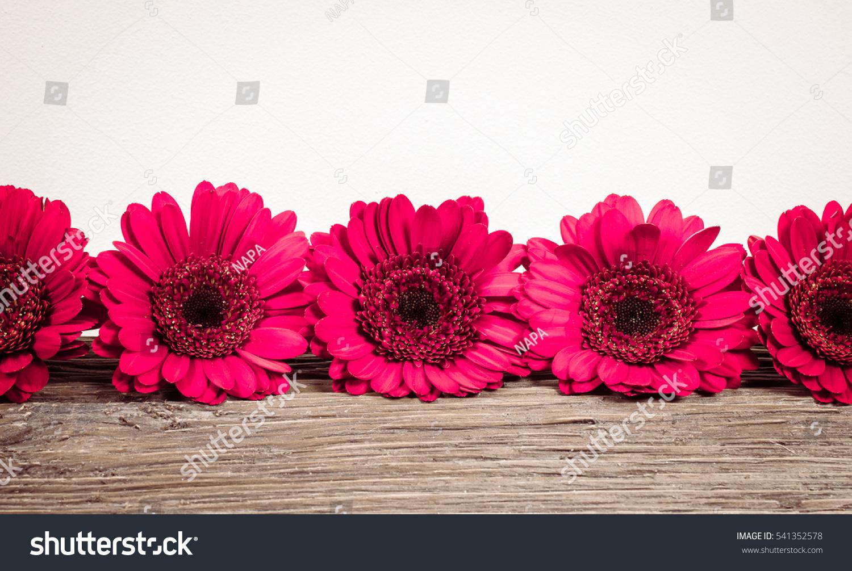 Red gerbera daisy flowers border ez canvas izmirmasajfo