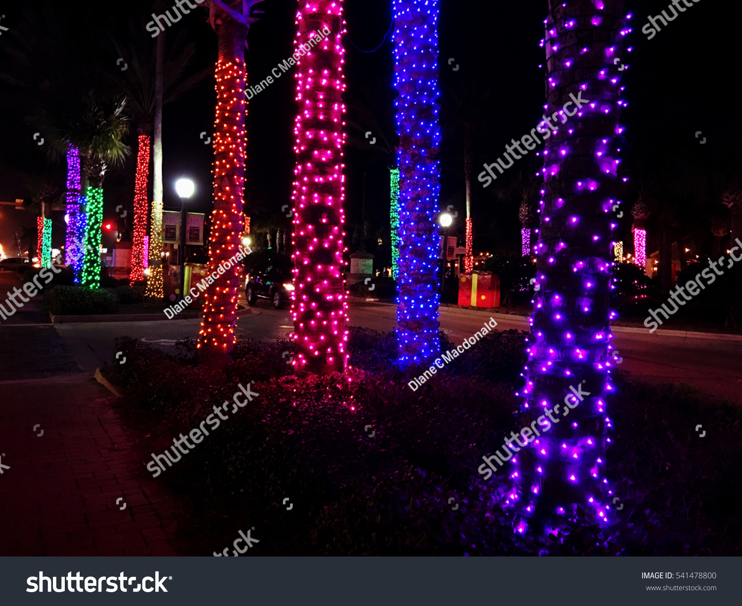Row Palm Trees Decorated Christmas Lights Stock Photo Edit Now