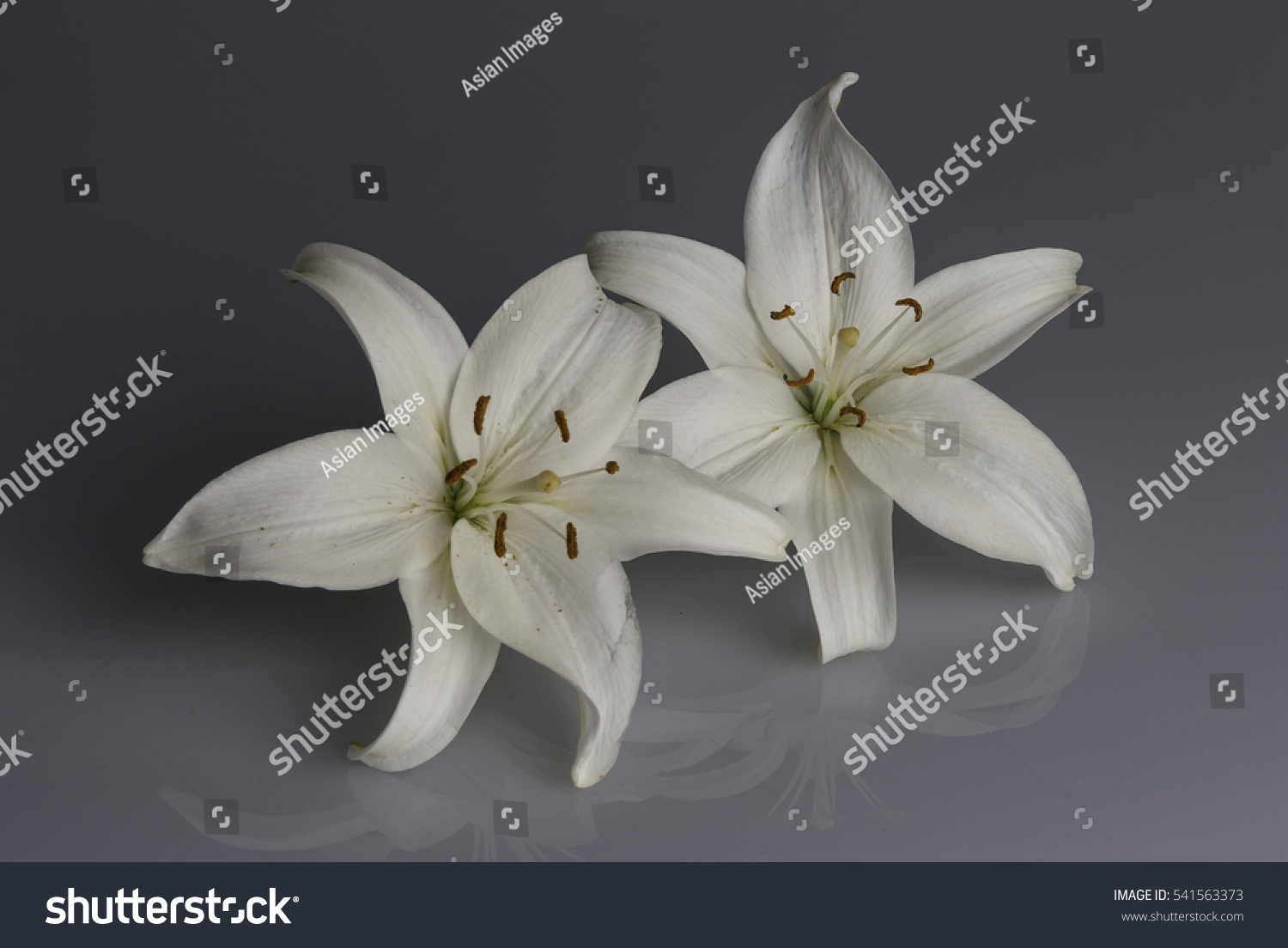 White Lily Flower Used Funerals Cover Stock Photo Edit Now