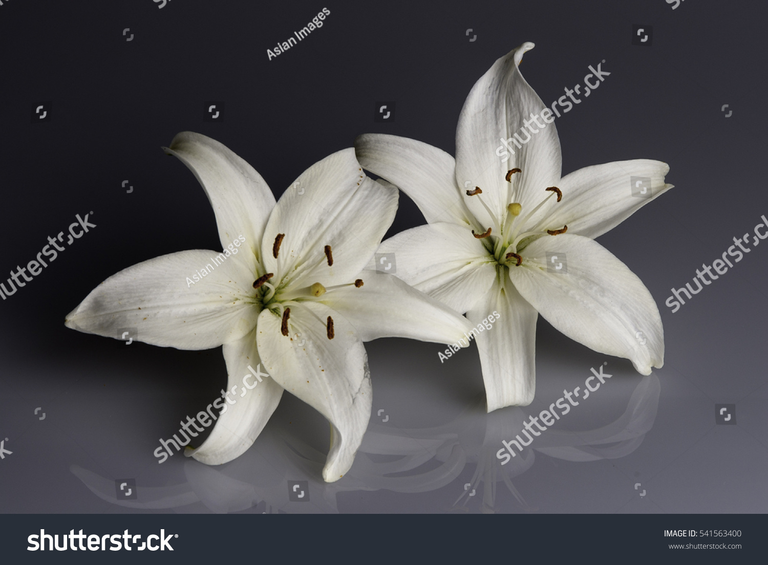 White Lily Flower Used Funerals Cover Stock Photo Royalty Free