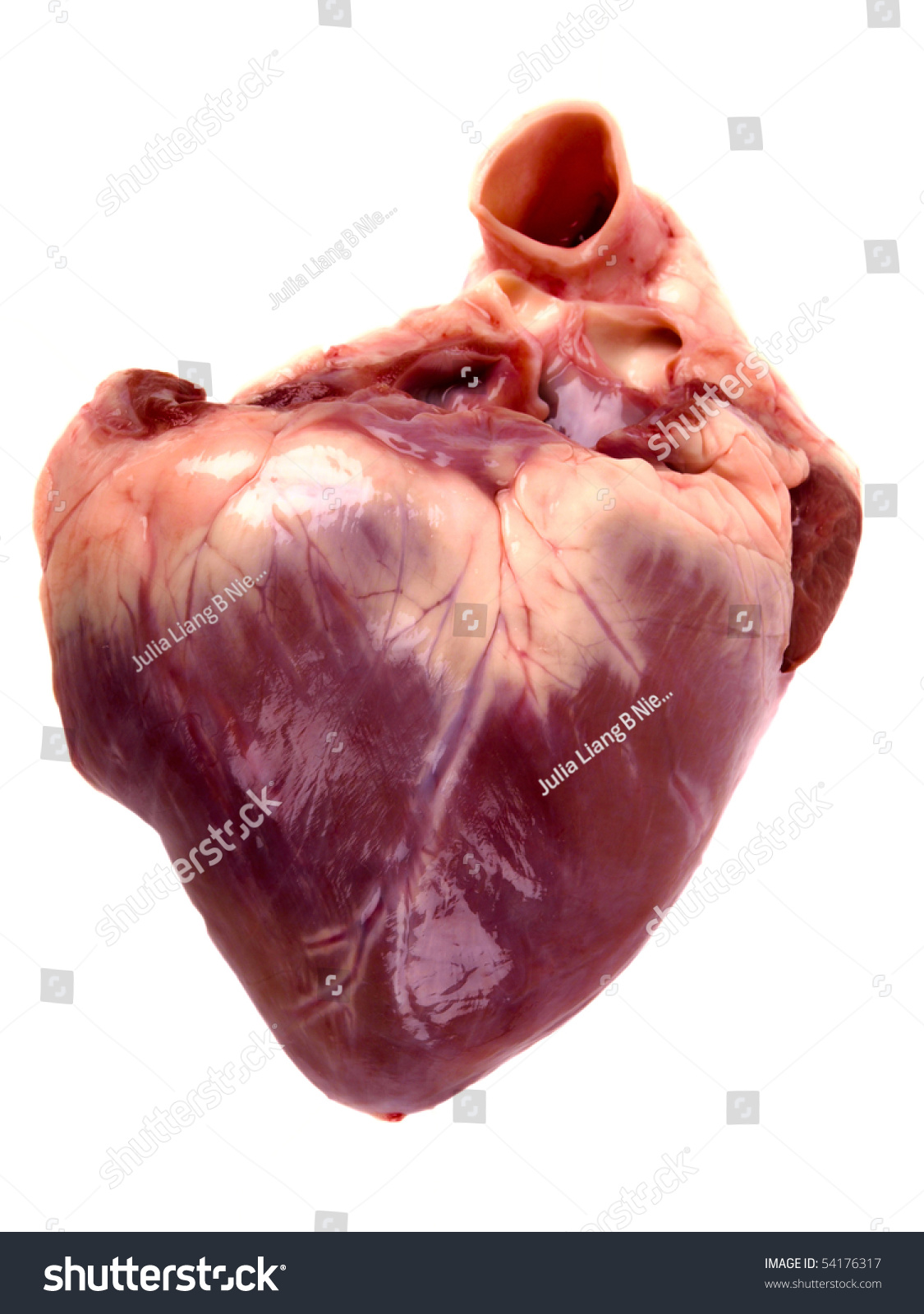 Pig Heart Close On White Background Stock Photo 54176317 Shutterstock