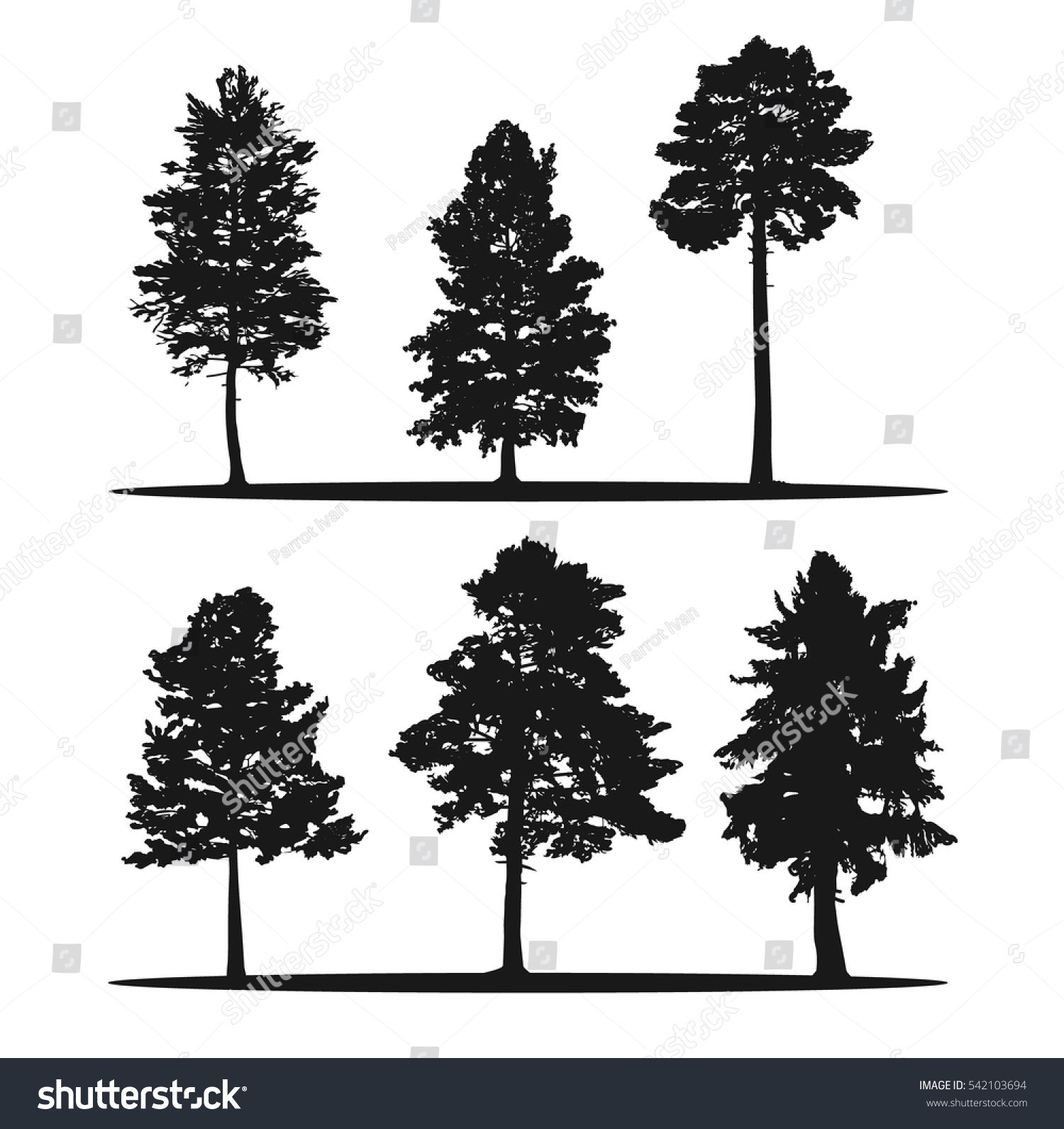Tree Silhouettes Red Cedar Siberian Pine Stock Vector ...