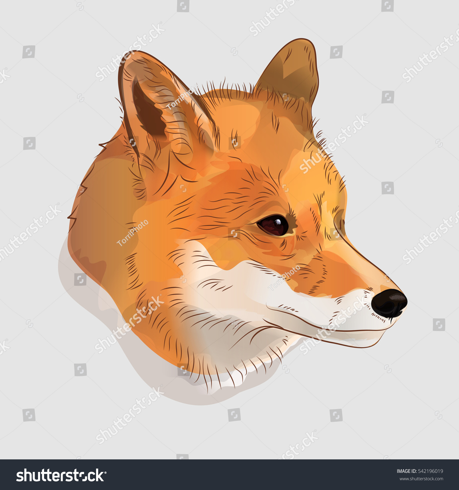 https://www.shutterstock.com/image-illustration/illustrative-portrait-red-fox-digital-illustration-542196019