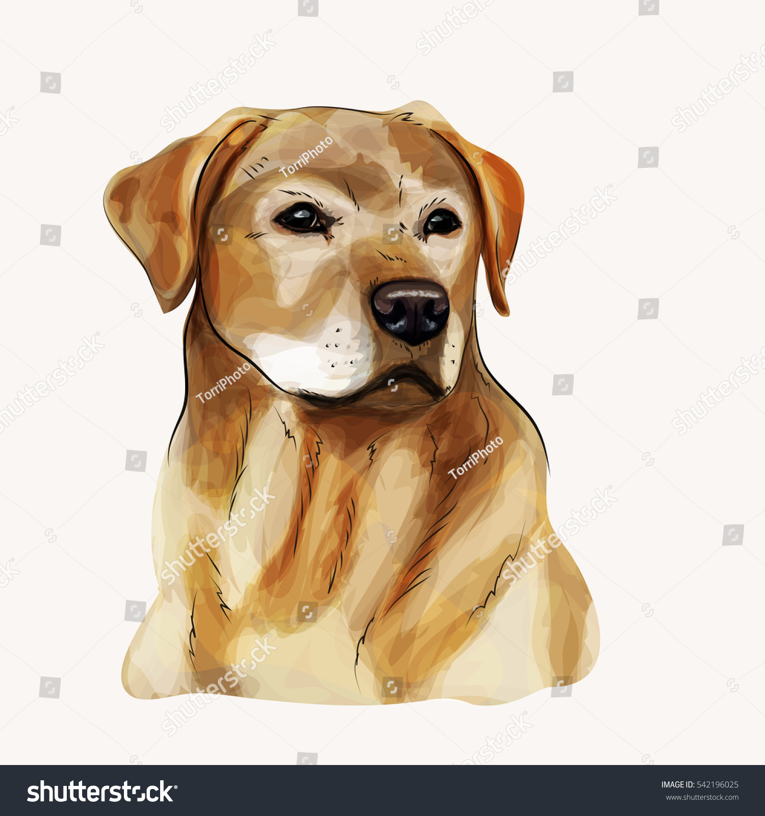 https://www.shutterstock.com/image-illustration/digital-illustration-yellow-dog-breed-labrador-542196025