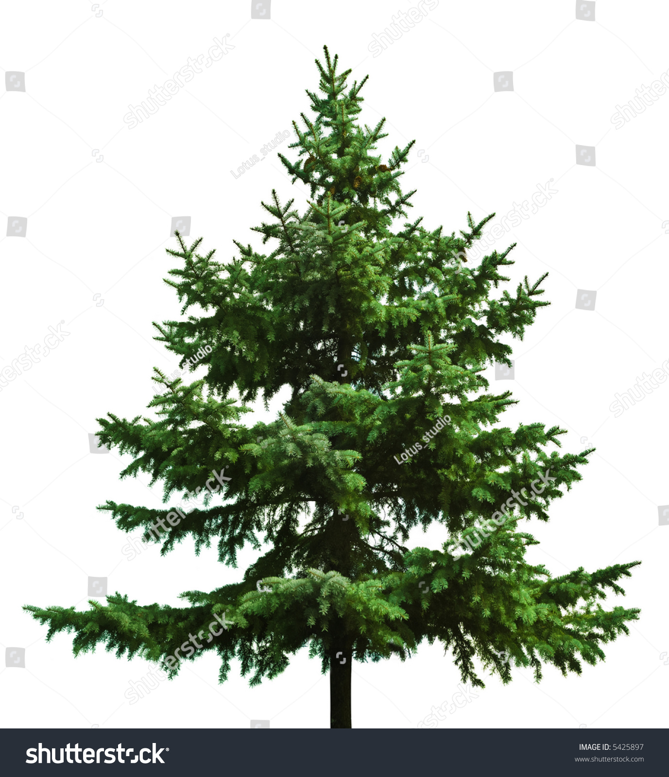 The Bare Christmas tree ready to decorate #5425897