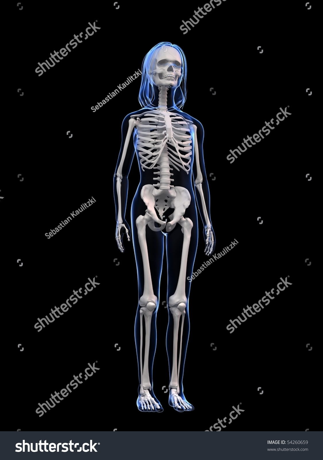 Young Girl Anatomy Skeleton Stock Illustration 54260659 - Shutterstock