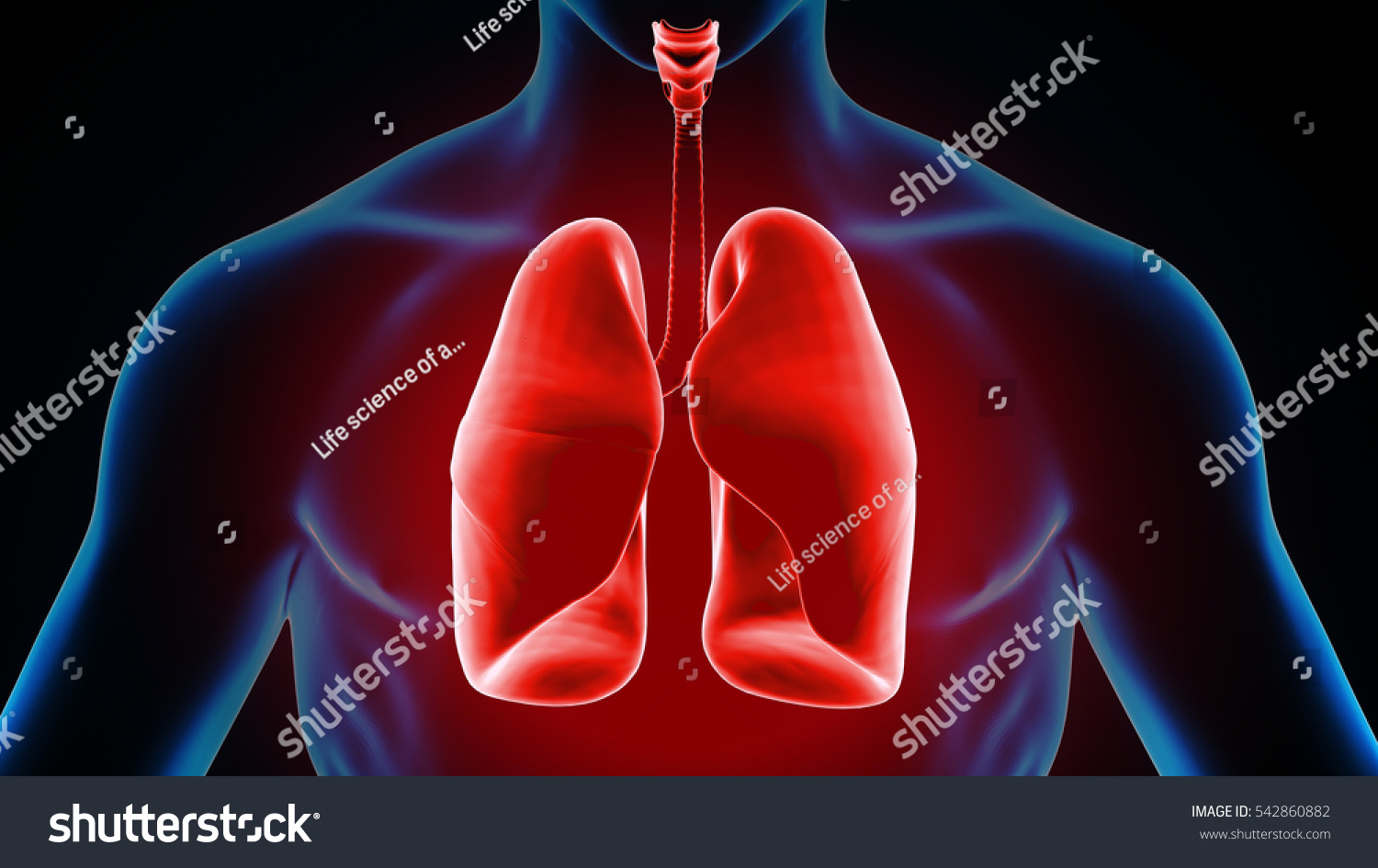 3 D Illustration Human Body Lungs Stock Illustration 542860882 ...