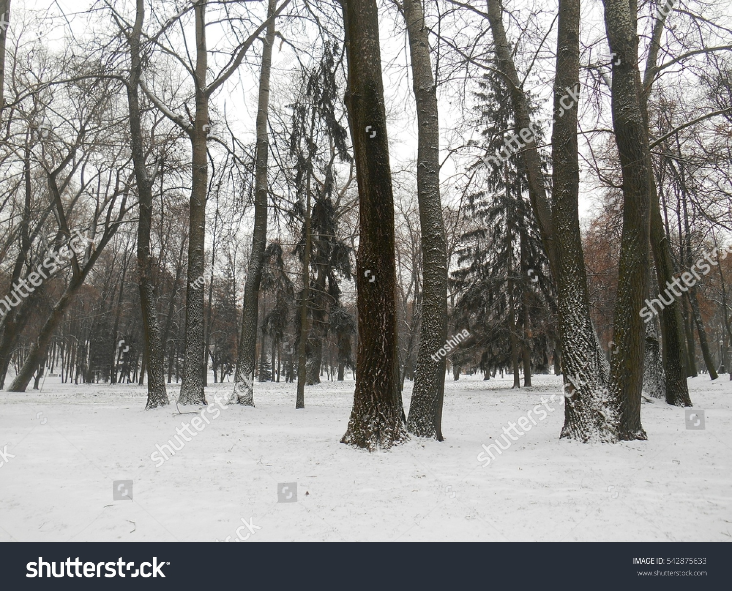 winter landscape park #542875633