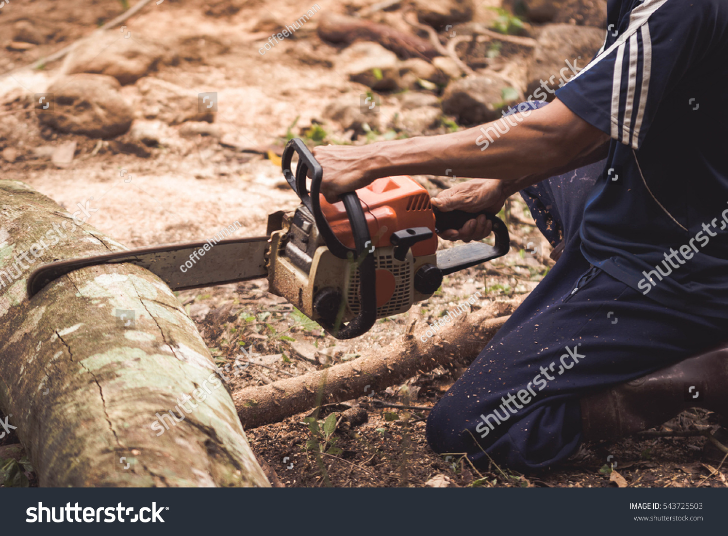 how to cut limbs off a tree with a chainsaw