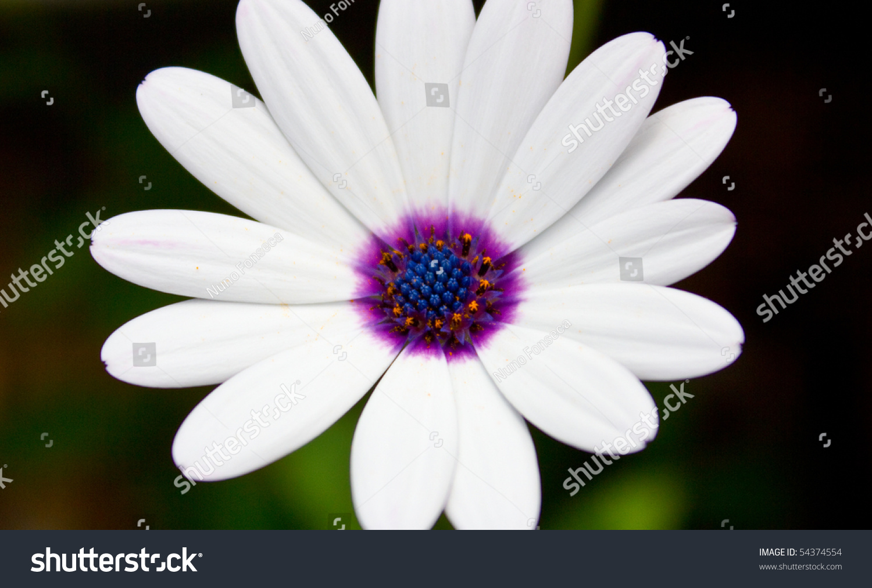 White Flower Violet Center Stock Photo Edit Now 54374554