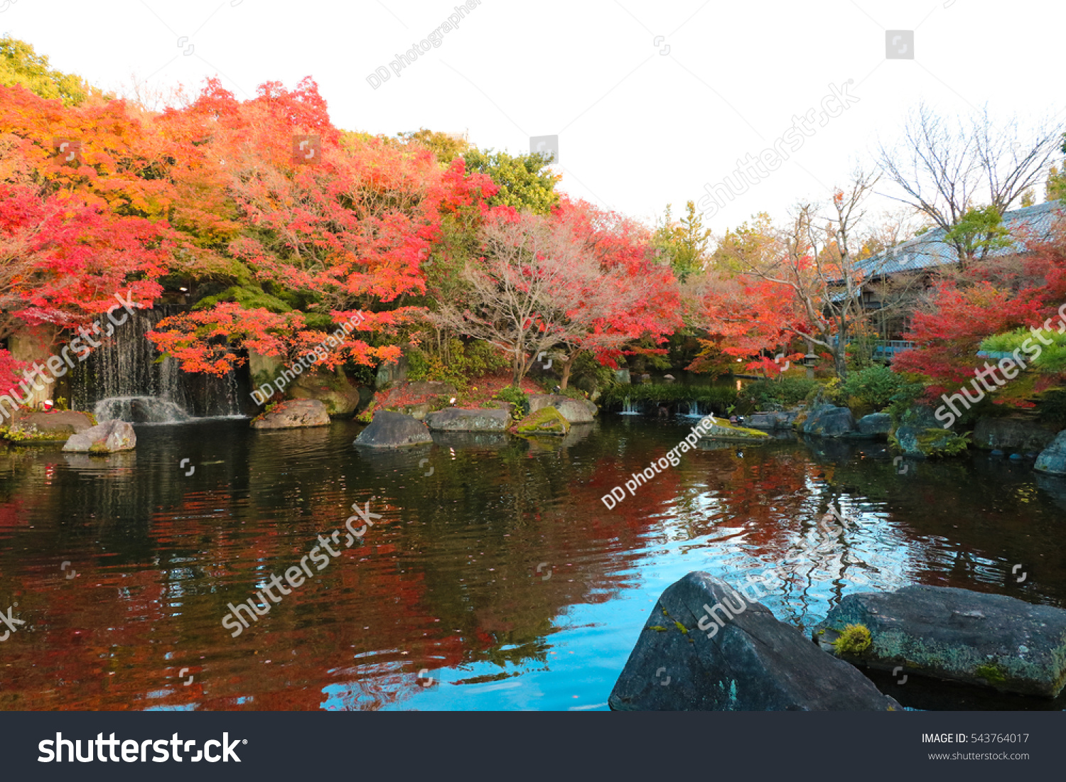 Red Maple Garden Paddling Pool Stock Photo (Edit Now) 543764017 ...
