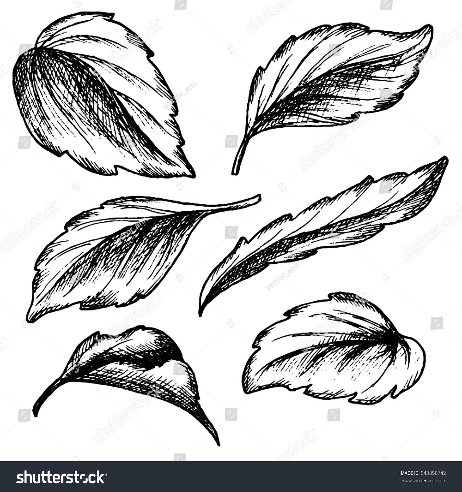 Sketch Ink Graphic Leaves Set Illustration Stock
