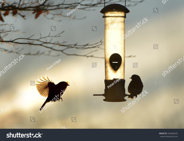 garden birds by bird feeder winter stock photo 544568245