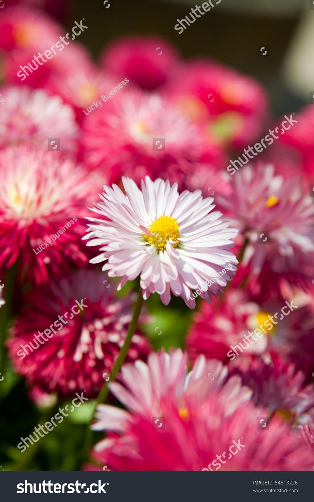Beautiful Pink Flower Gardens