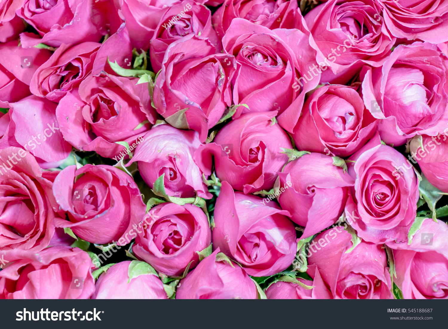 Pink of roses bouquet background set of beautiful flower valentine pink of roses bouquet background set of beautiful flower valentine concept ez canvas izmirmasajfo