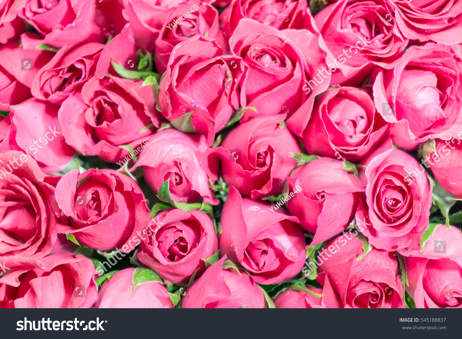 Pink Of Roses Bouquet Background Set Of Beautiful Flower Valentine