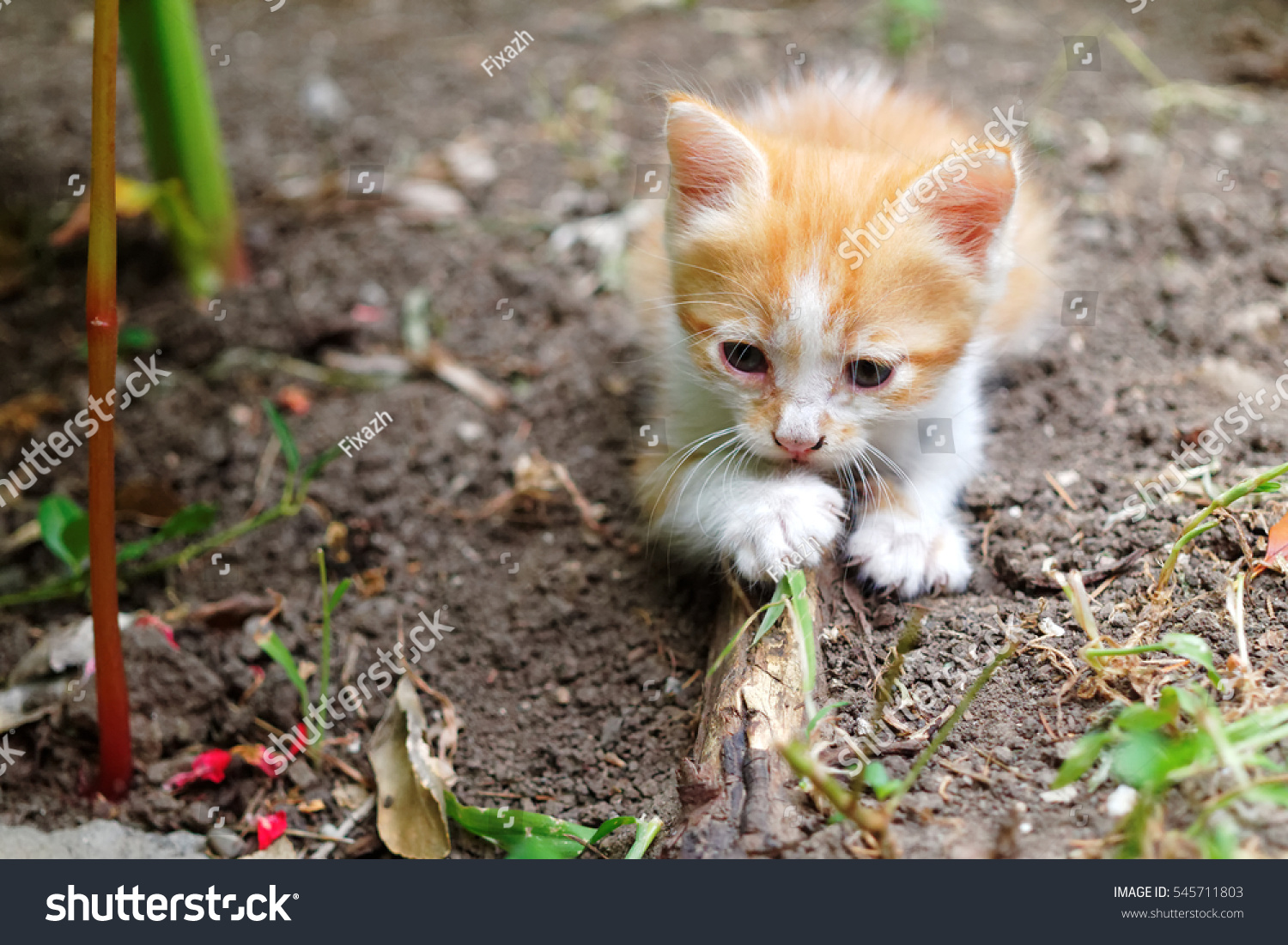 stock-photo-small-red-white-kitten-in-th
