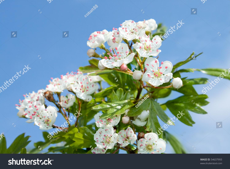 Wild Spring Flowers On Blue Sky Stock Photo Royalty Free 54637993