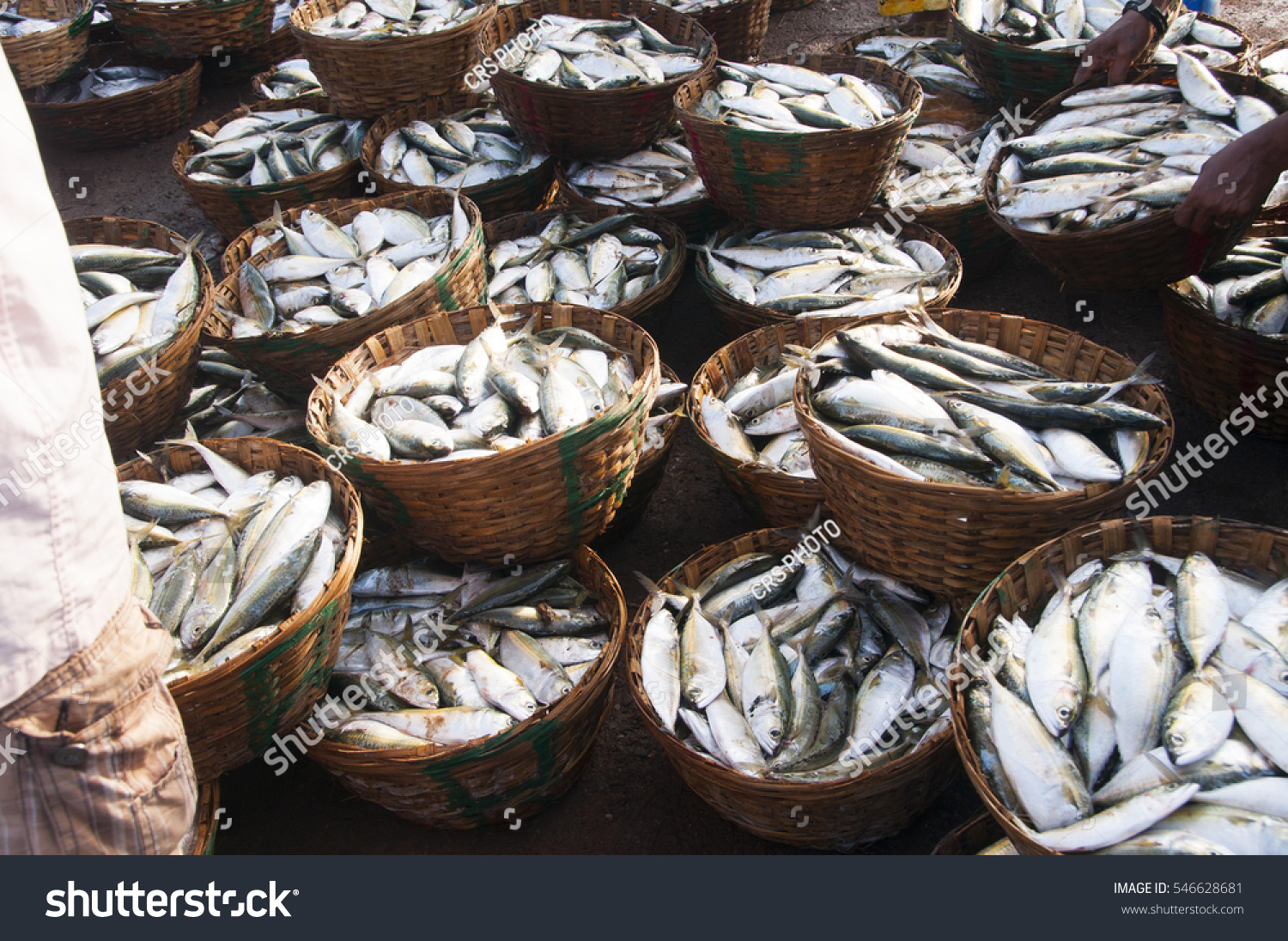Margao goa india 22 september crowd stock photo 546628681 for Wholesale fish market near me