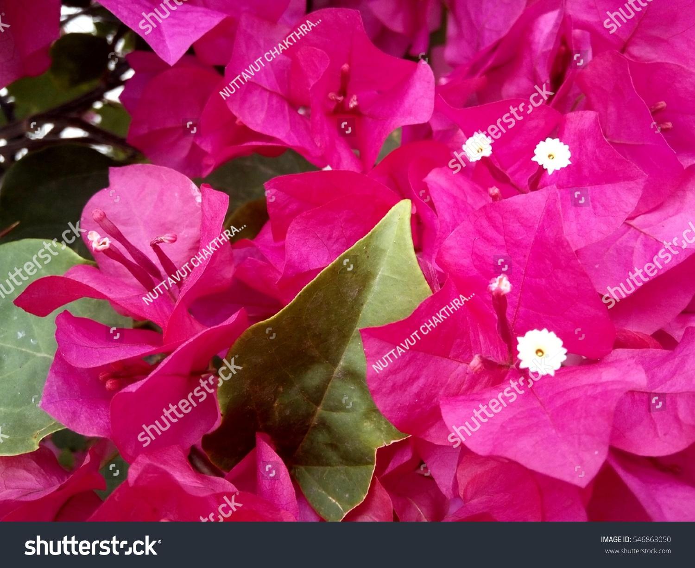 Beautiful Purple Flowers Ez Canvas