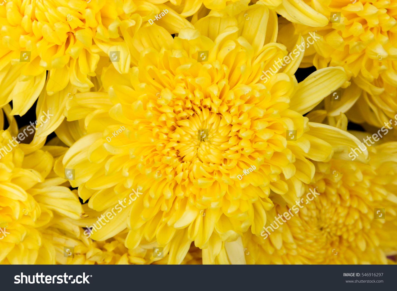 Yellow Flower Background Stock Photo Edit Now 546916297 Shutterstock