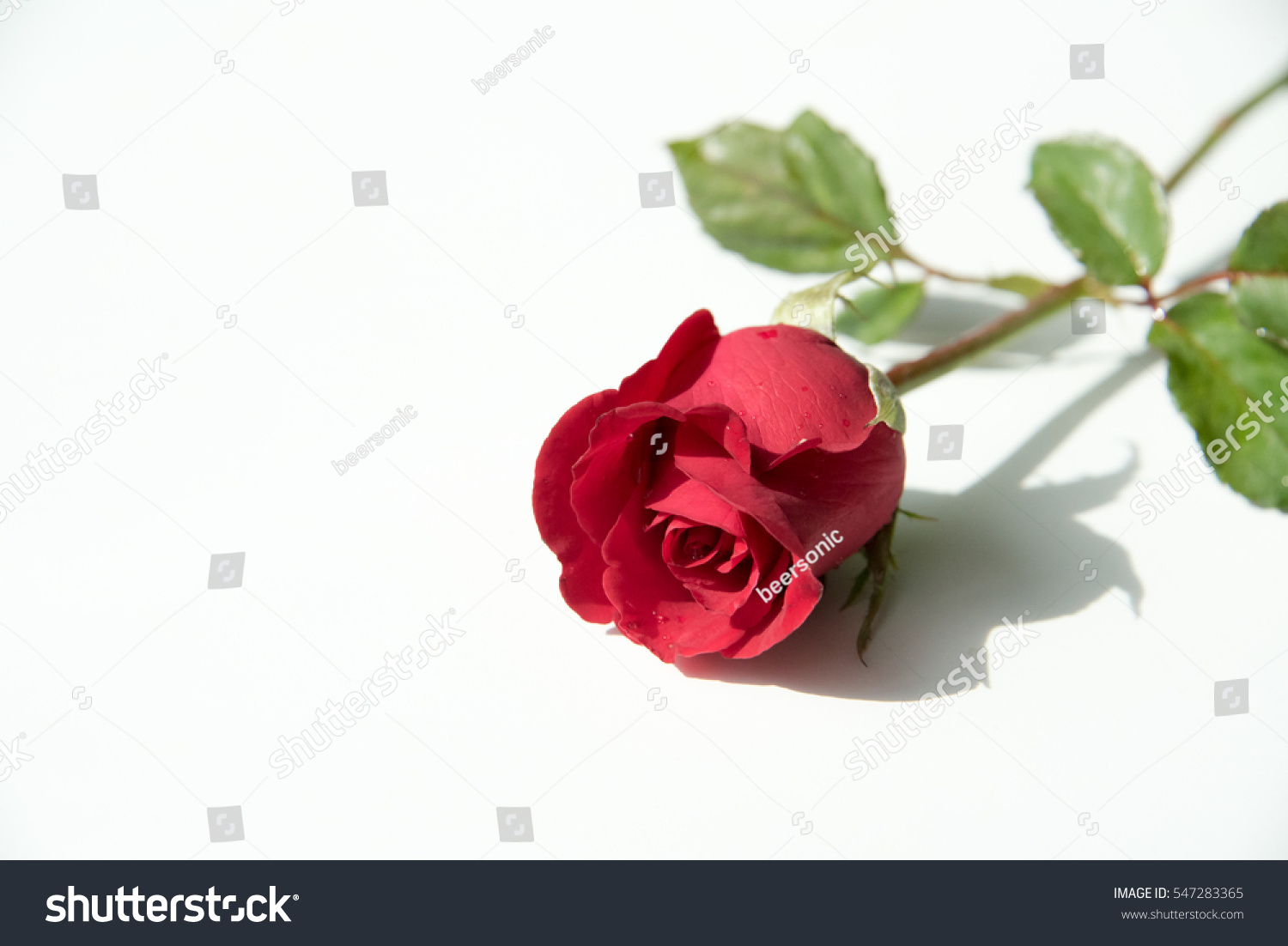 Red Rose Symbol Love Stock Photo Edit Now 547283365 Shutterstock