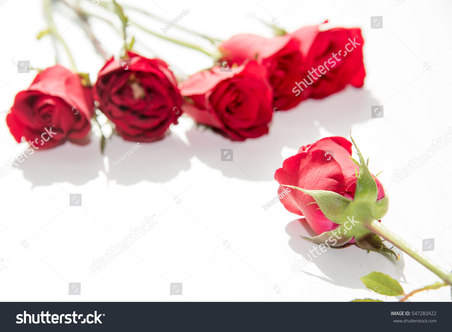 Red Rose Symbol Love Stock Photo Edit Now 547283422 Shutterstock