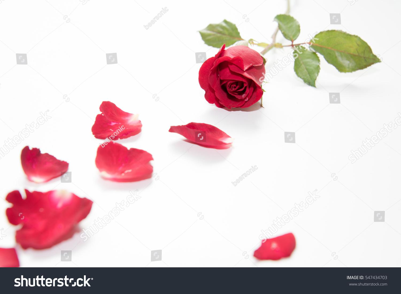 Red Rose Symbol Of Valentine Ez Canvas