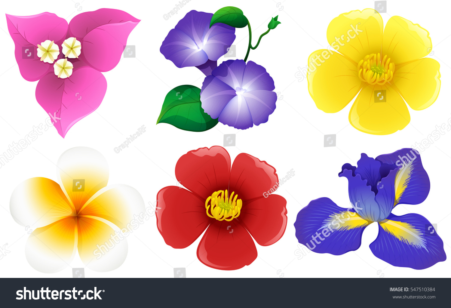 Different Types Flowers On White Illustration Stock Vector Royalty