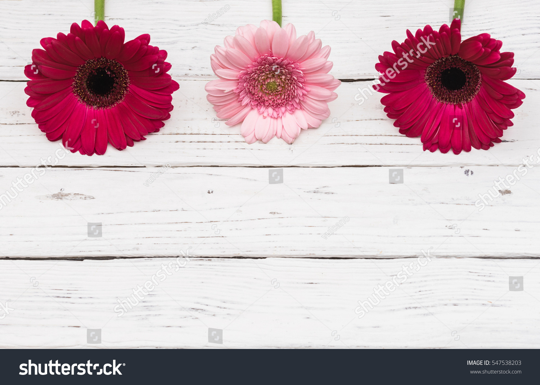 Pink gerbera daisy flowers border on stock photo edit now pink gerbera daisy flowers border on white wood background for valentines day anniversary birthday izmirmasajfo