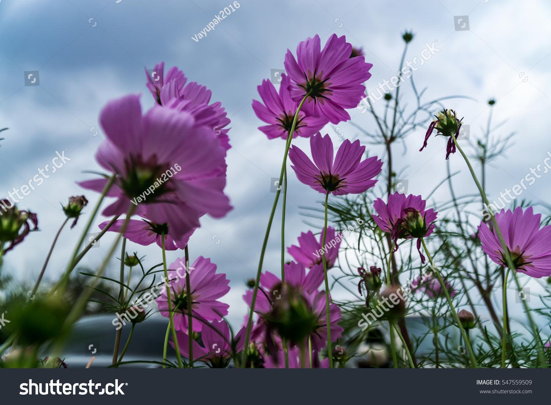 Beautiful winter flowers ez canvas id 547559509 izmirmasajfo