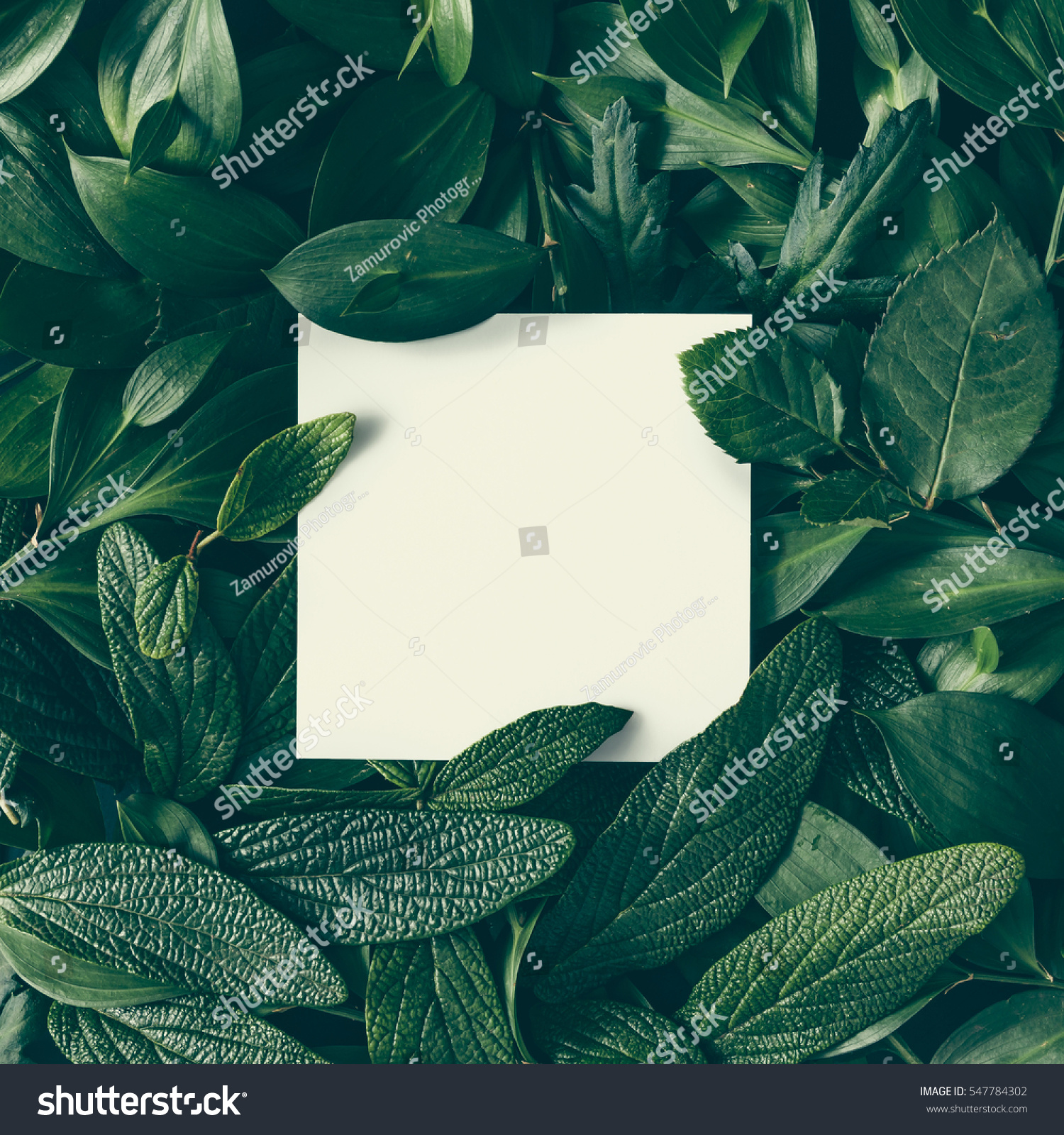 Creative layout made of flowers and leaves with paper card note. Flat lay. Nature concept #547784302 - 123PhotoFree.com