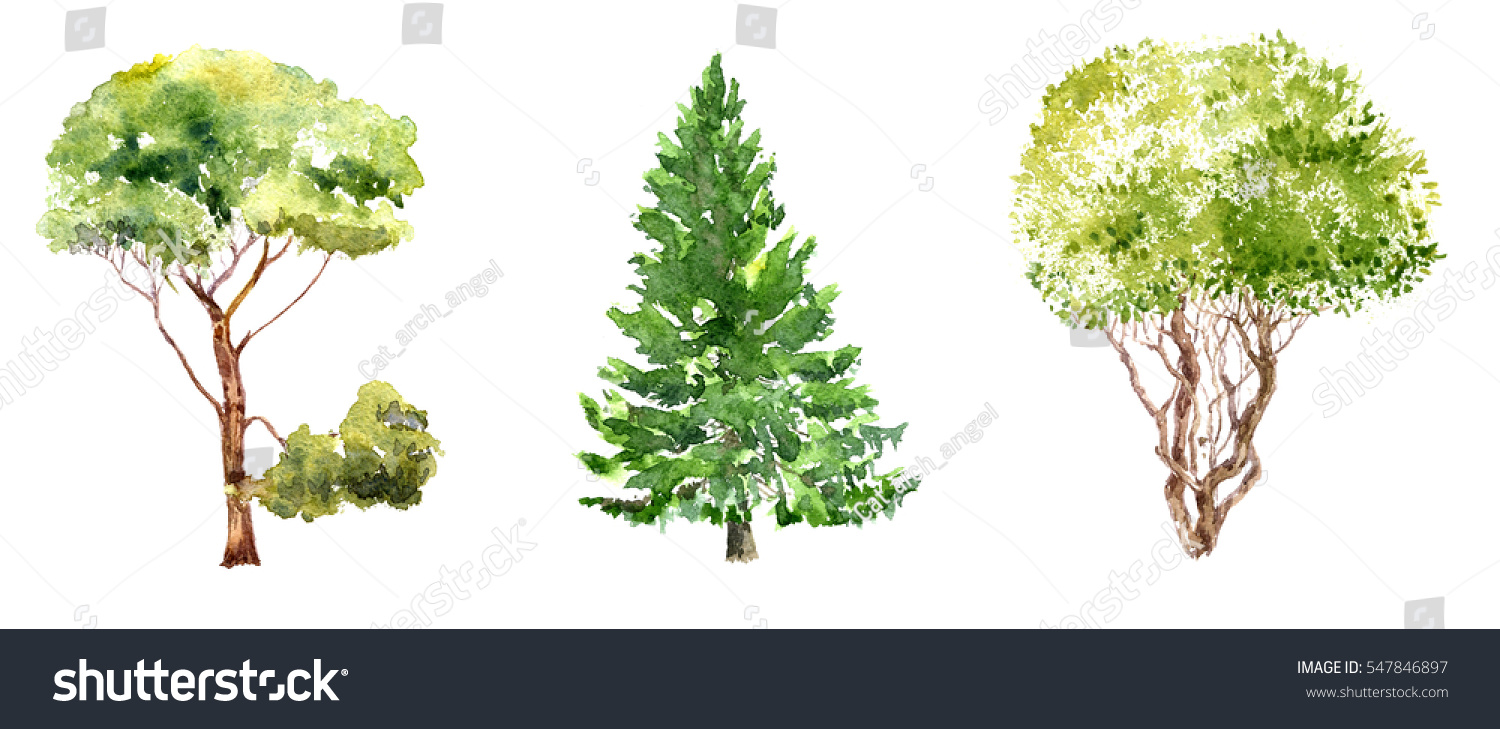 Set Trees Drawing By Watercolor Fir Stock Illustration 547846897 ... for Tree Drawing With Watercolor  55nar