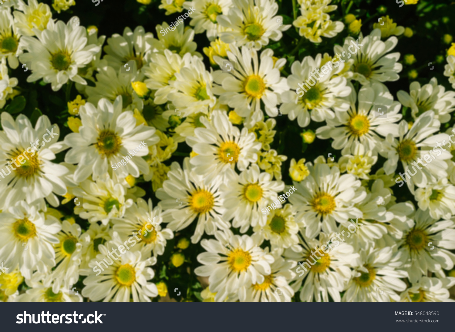Soft Focus Bouquet White Flowers Blooming Stock Photo Edit Now