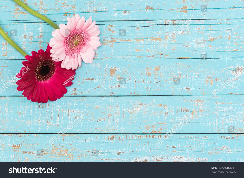Romantic Pink Gerbera Daisy Flowers On Stock Photo Edit Now