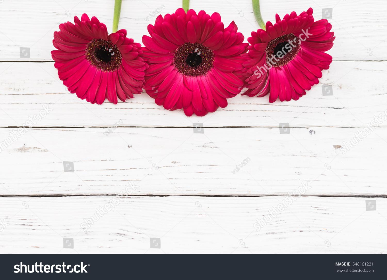 Pink gerbera daisy flowers border on white wood background for pink gerbera daisy flowers border on white wood background for valentines day anniversary birthday or mothers day ez canvas izmirmasajfo