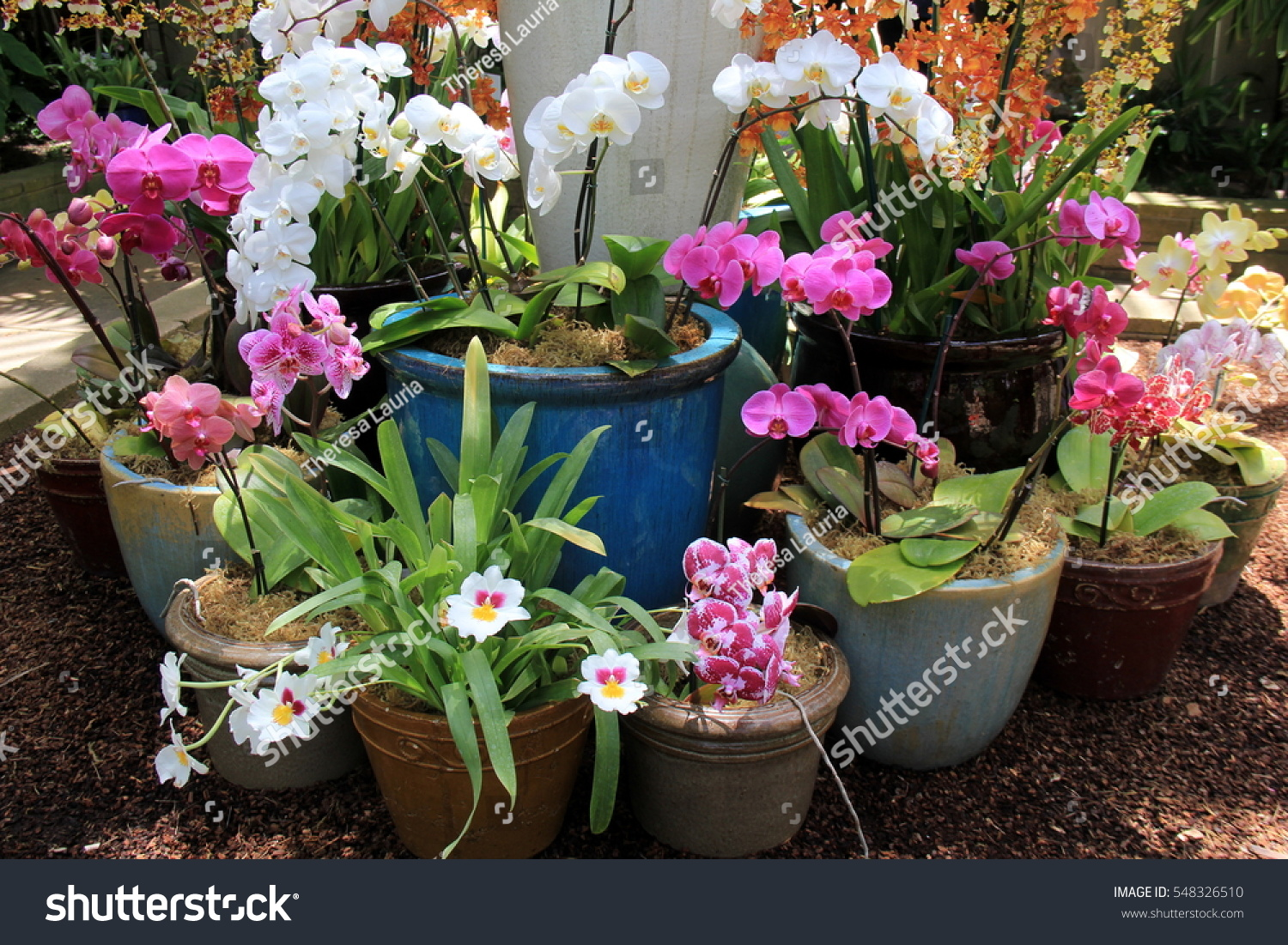 Orchid Phalaenopsis Variety Of Orchids In The Garden Center Kharkov