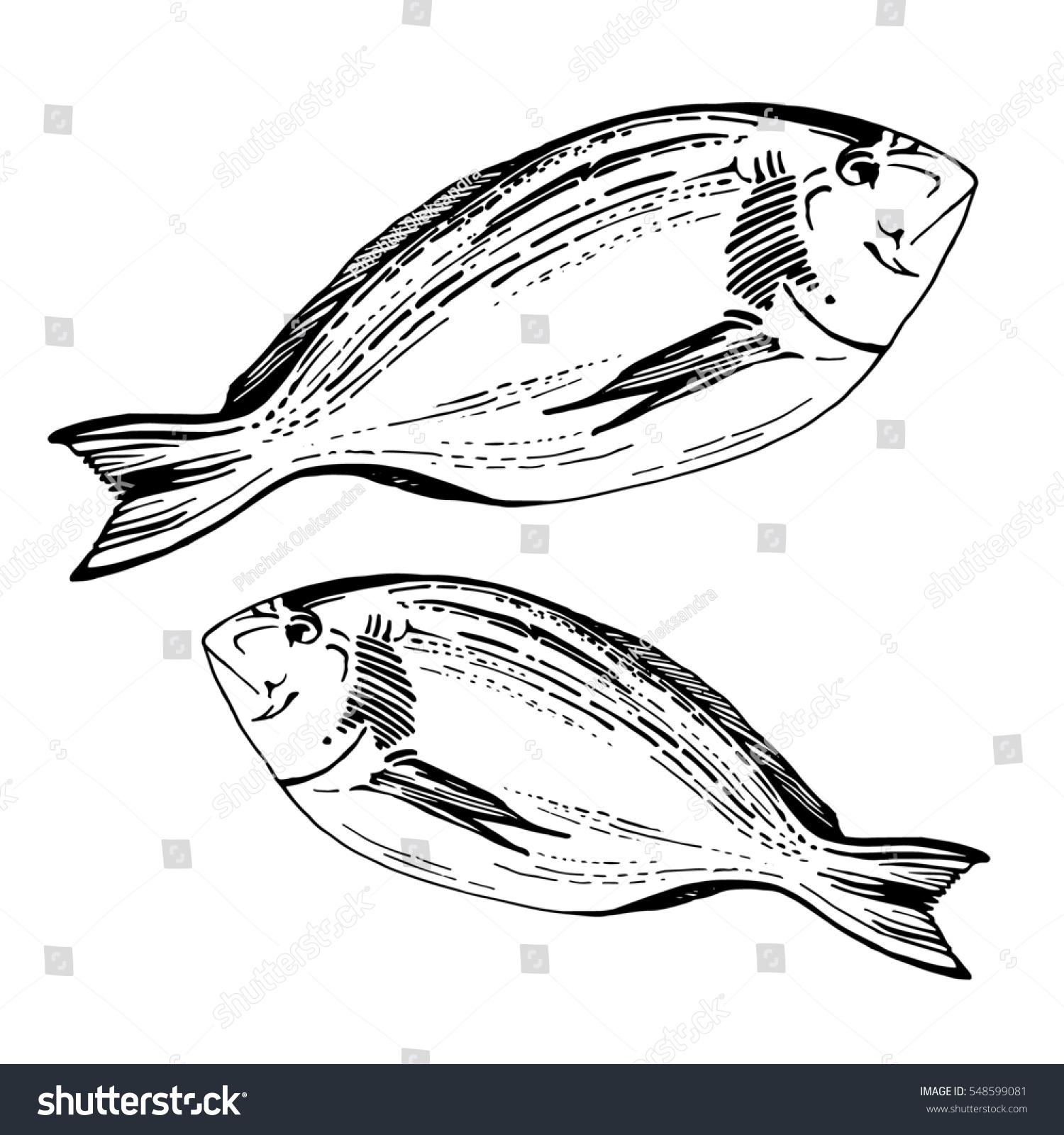 hand drawn sketch fish dorado fish stock illustration 548599081