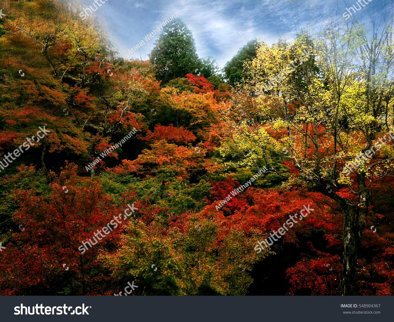 Fall Colors in Kubota Garden - Japanese garden in the neighborhood ...