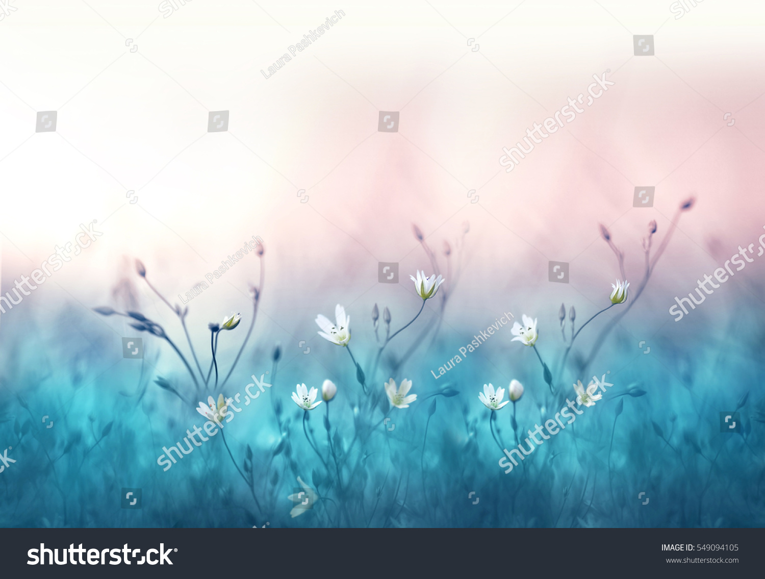Similar images stock photos vectors of small white flowers on similar images to small white flowers on a toned on gentle soft blue and pink background outdoors close up macro spring summer border template floral ba mightylinksfo