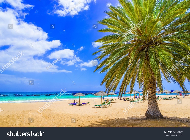 Beach in Tenerife, Canary Islands, Spain #549304237