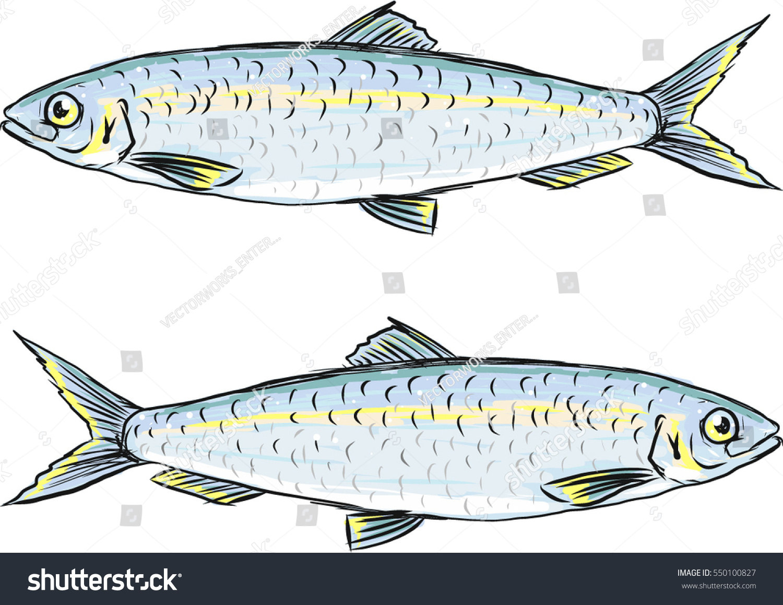 Herring Fish Vector Sketch Illustration Clipart Stock Vector ...