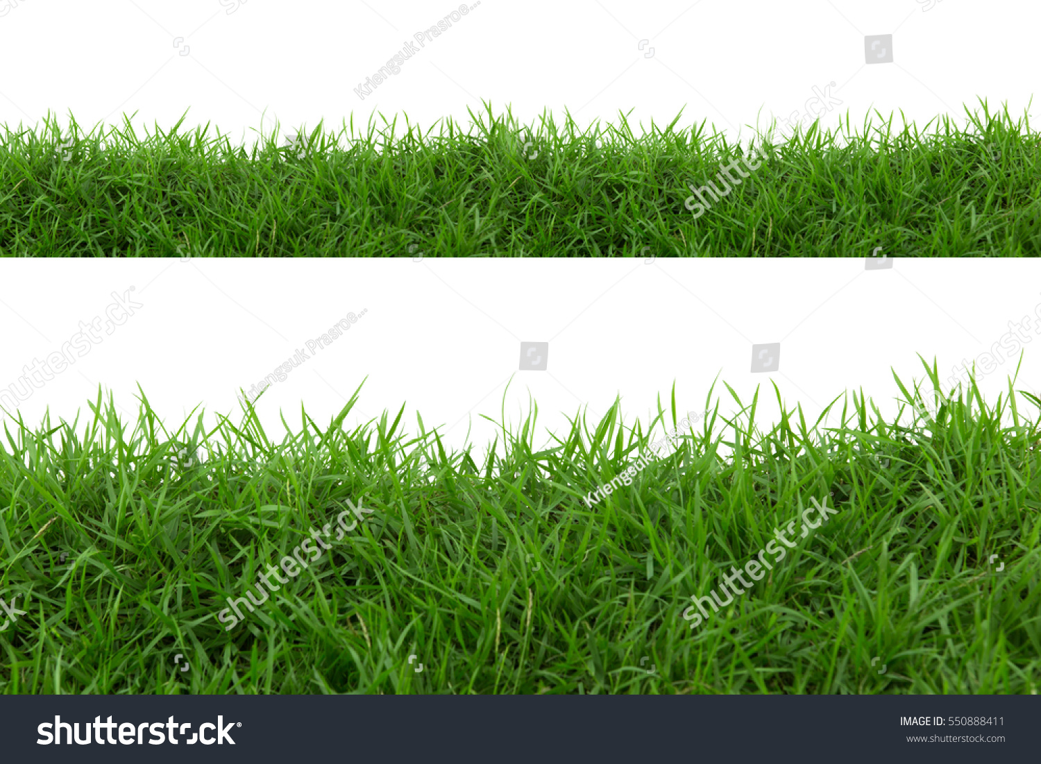 Grass isolated on white background. #550888411 - 123PhotoFree.com