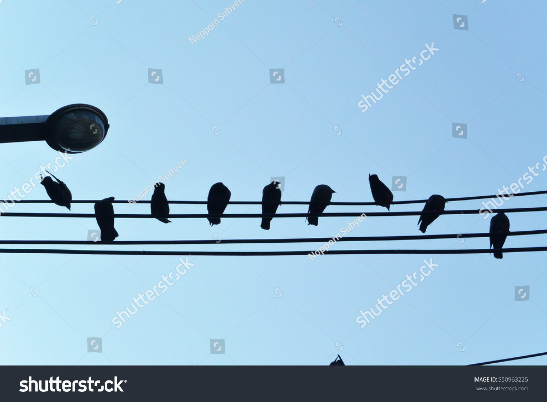 Birds On Telephone Lines Stock Photo & Image (Royalty-Free ...