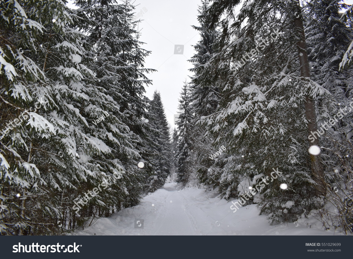 snowy forest white tree branches winter themed snowy pine forest winter on branches стоковые фотографии 255