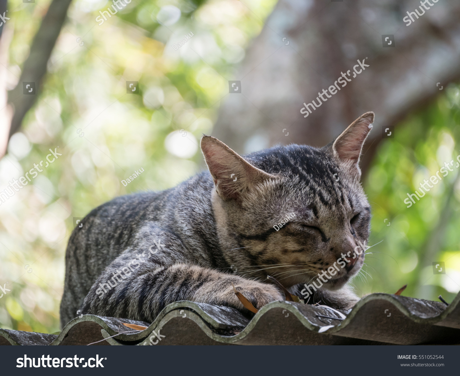 Cat With Long Nose Grey Gag