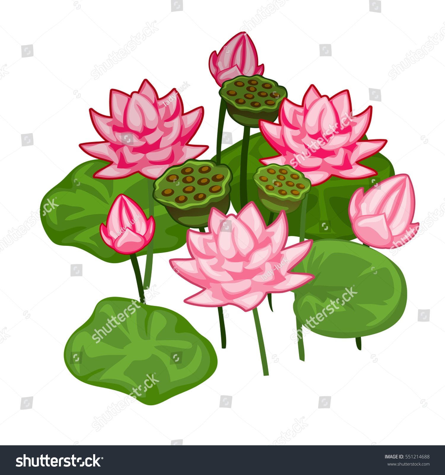Blooming pink water lily isolated on stock vector royalty free blooming pink water lily isolated on a white background beautiful cartoon flowers of pink lotus izmirmasajfo