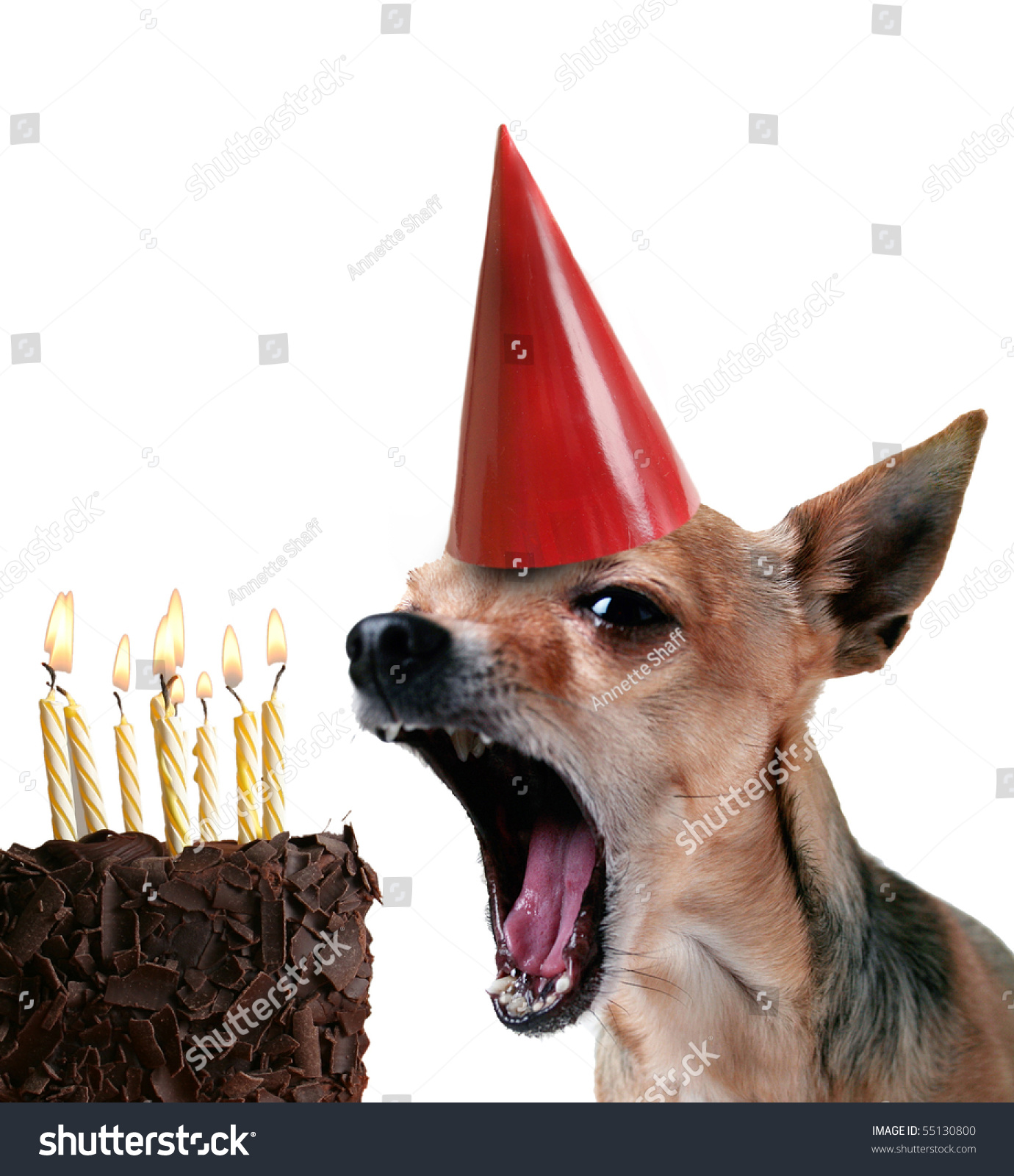Chihuahua Blowing Out Candles On Piece Stock Photo